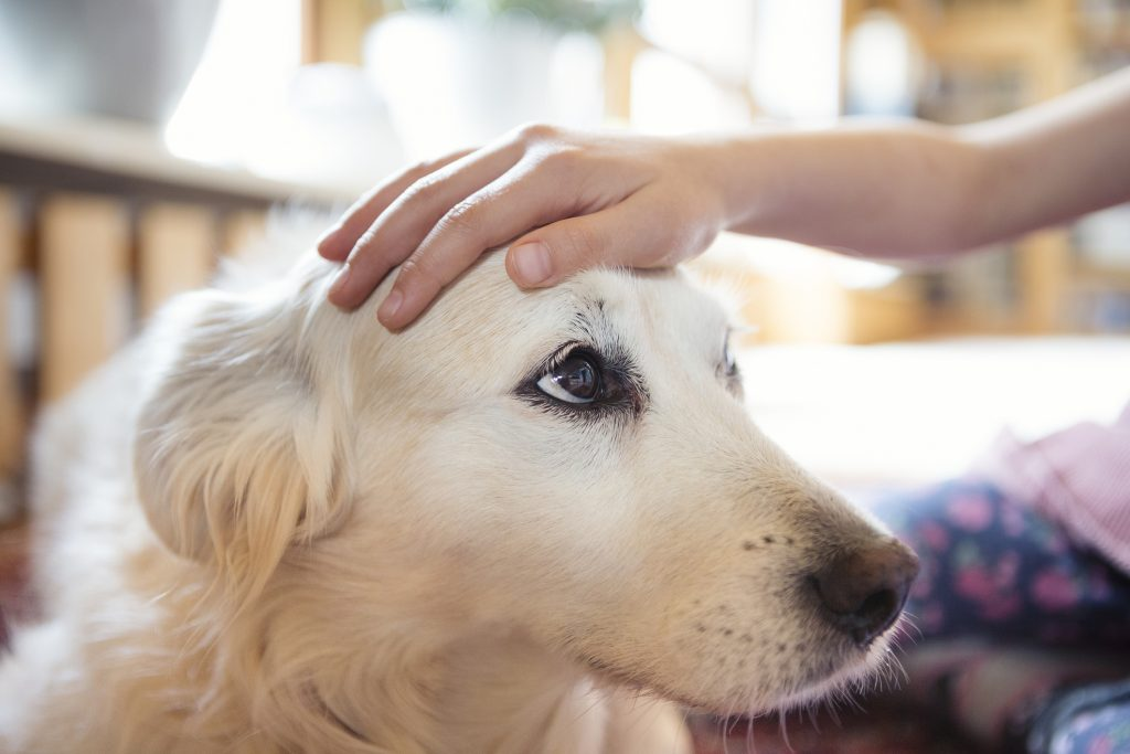 canine care basics